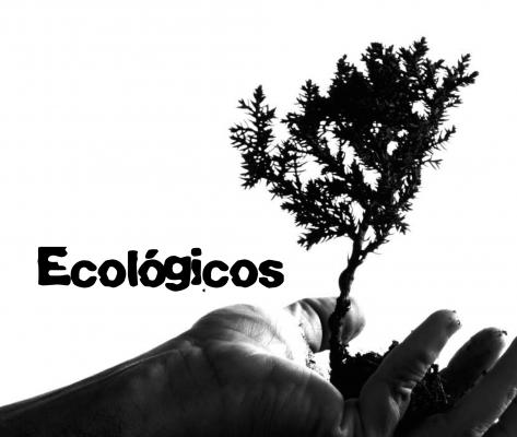 Set de estuche ecológico